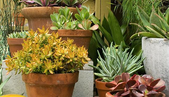 Low Maintenance plants for the backyard from bhg.com With any outdoor room,