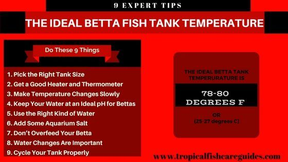 The Total Guide To Tropical Fish Fish Infographic Tropical Freshwater Fish Pet Fish