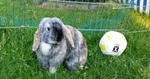 Sirius B Akademie Osterbrunch Vegan Kaninchen Susse Tiere Babytiere