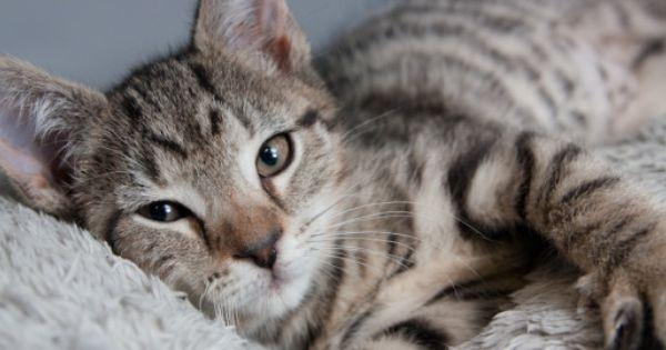 Safe Haven Cat Shelter Raleigh Cat Shelter Cats Safe Haven