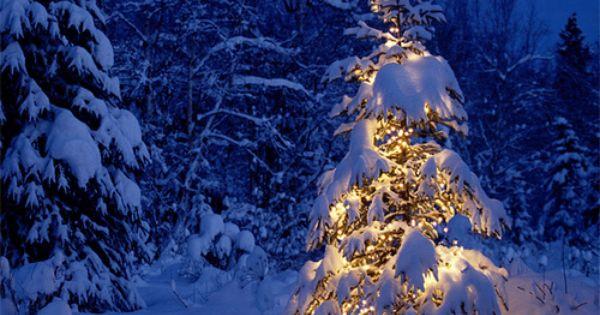 xmas tree | Christmas Tree's