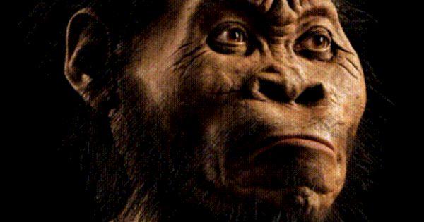 Gollum Hominid Gif 400 319 Menschliche Evolution Der Moderne Mensch Menschheitsgeschichte