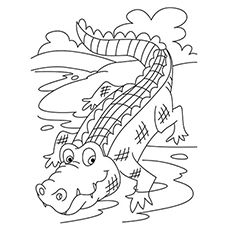 Top 10 Free Printable Crocodile Coloring Pages Online Zoo Coloring Pages Animal Coloring Pages Coloring Pages