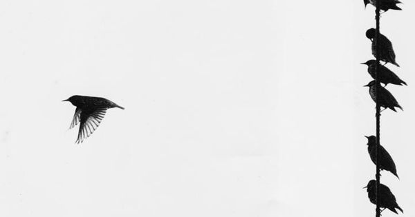 Bird on a wire template - photo#31