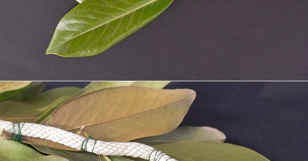 DIY Magnolia Leaf Garland - Repinned by Country Florist of Waldorf WaldorfWedding