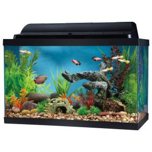 Top Fin 10 Gallon Hooded Aquarium Aquariums Petsmart Aquarium Fish Tank 10 Gallon Fish Tank