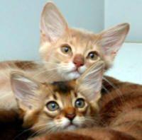 How To Get Rid Of Fleas On Kittens Fleas On Kittens Cat Has Fleas Fleas