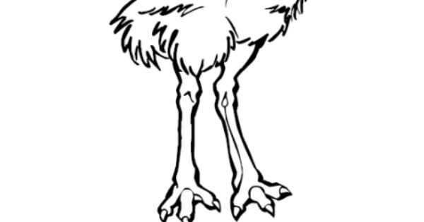 Animal Colouring Pages Sparklebox : Simple outline emu coloring page zoo scrap pages