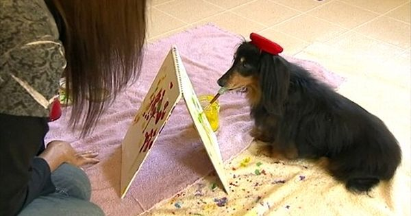 Blind Pet Dachshund Paints Saves Fellow Rescue Dogs With Artwork Dachshund Painting Dog Paintings Dachshund