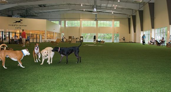Indoor Dog Park Http Www K9grass Com Images Wide Home3