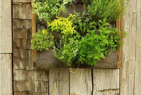 "Vertical Garden| Serafini Amelia| It's a living ""painting"". Terrain's Long Vertical Garden"