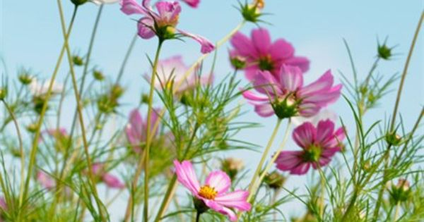 "pp: ""Top 10 Fast Flowers"" from Gardeners' World - spring is here"