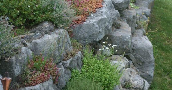 Steingarten anlegen welche pflanzen eignen sich am besten gartengestaltung garten und - Welche pflanzen eignen sich fur einen steingarten ...