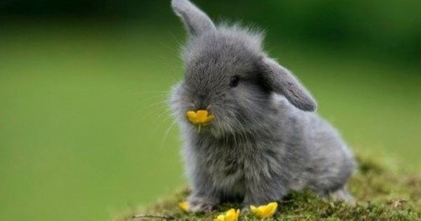 Cuteness Of The Day The Fluffy Baby Bunnies Cute Bunny Pictures Cute Animals Cute Creatures
