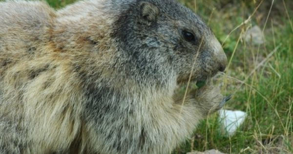 05a32a21637389ec230c58bfe9a21030 - How To Get Rid Of Groundhogs In Vegetable Garden