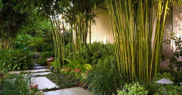 Planter des bambous dans son jardin quelle bonne id e jardin moderne bambou et for t - Planter des bambous dans son jardin ...