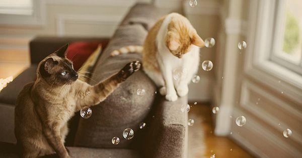 Kitty Cats & bubbles
