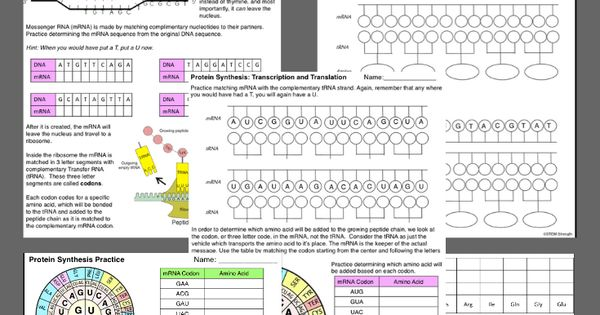 Pin On Elementary Science Projects Materials