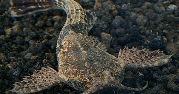 Pin De Saღia Sคlee๓ Em Aquatic º World Peixes Exoticos Peixes Animais
