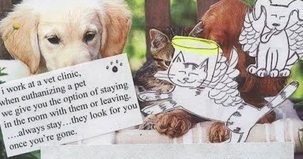 Saddest Postsecret Ever Post Secret Secret And Whisper Dog Heaven