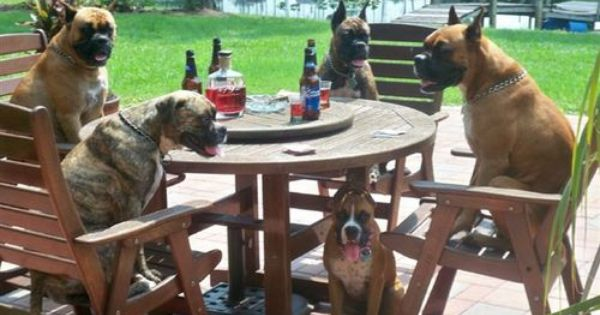 Boxers Belong To Someone In Fl Aren T They Awesome Boxer Dogs Boxer Puppies Boxer Love