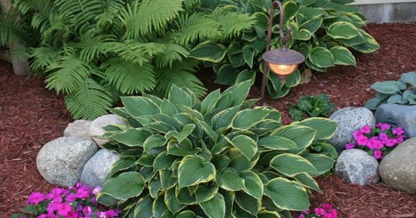 Landscaping Ideas For shady patio with Mississippi plants | Landscaping – Hosta