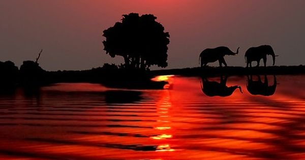 #Sunset in Botswana • elephants photo: Michael Sheridan on Redbubble beautiful photography