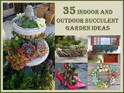 Recipes projects more 35 indoor and outdoor succulent for Indoor gardening pdf