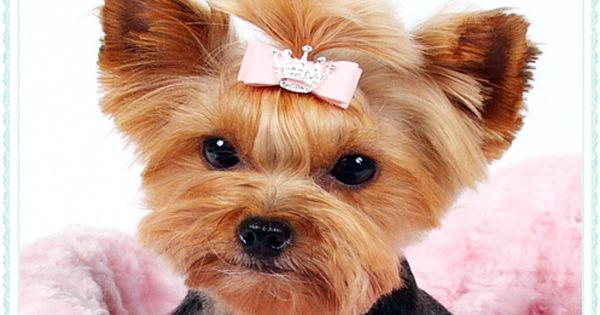 Small Dog Accessories Dog Hair Bows And Barrettes Dog Hair Bows Small Dog Accessories Fluffy Animals