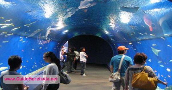 جراند اكواريون الغردقة اكبر اكواريوم فى الشرق الاوسط يتميز بتصميم جذاب و روعه مع احدث الوسائل للترفيه احجز الأن مع ش Aquarium Pictures Public Aquarium Aquarium