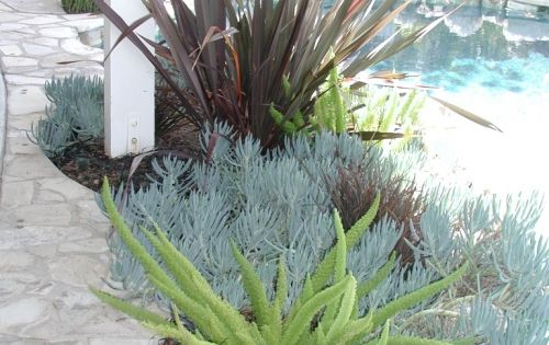 drought resistant plants - Google Search... Going to need these ideas this