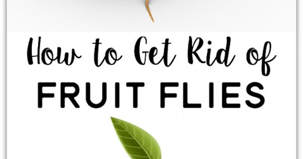 how to get rid of fruit flies use stuff you already have at home send these pesky pests packing. Black Bedroom Furniture Sets. Home Design Ideas