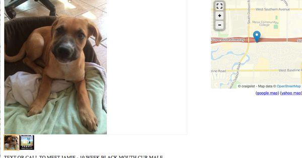 Jamie Puppy 10 Weeks Phoenix Area Http Www Poundanimalsworthsaving Org Puppies Dogs Animals