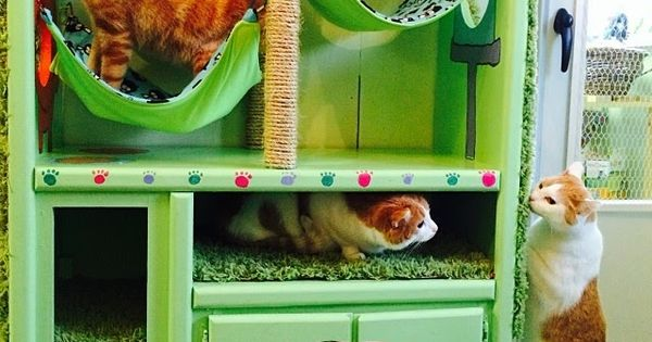 Cat house: upcycled entertainment center! Love this idea but would stain the