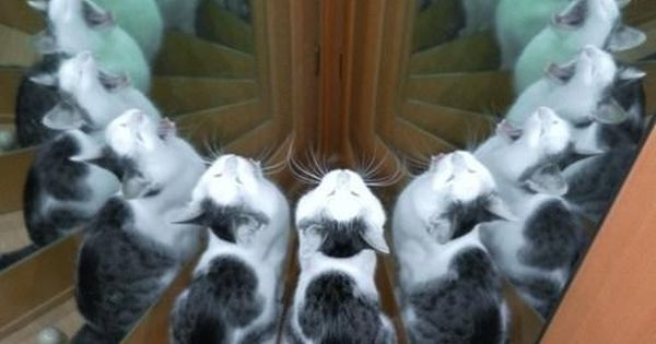 Only one cat. great image