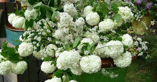 Bouquet de lilas et boule de neige http www for Composer bouquet en ligne