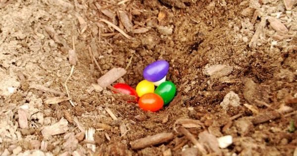 Darling Easter idea: magic jelly beans. Plant jelly beans the night before