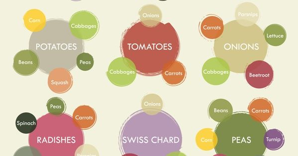 Companion Planting Vegetables Cheat Sheets