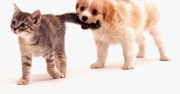 cute cute baby Animals Baby Animals| http://cutebabyanimals861.blogspot.com