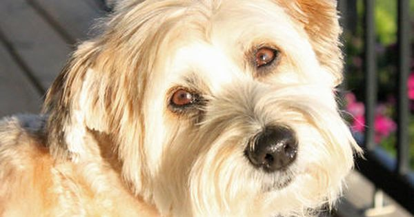 Mudge The Mixed Breed Pretty Dogs Mixed Breed Dogs