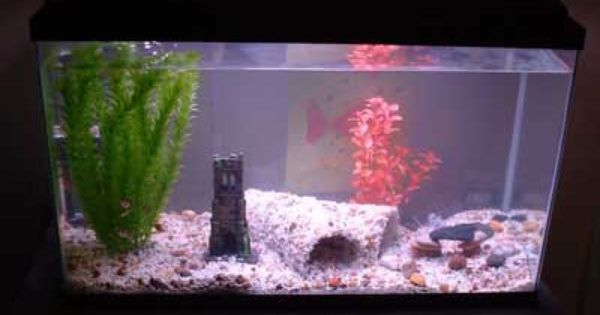 Diy aquarium cave using a pvc pipe tropical fish for Aquarium cave decoration