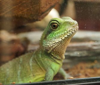 Pin On Reptile Care Tips