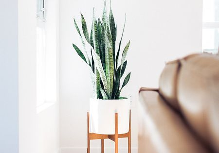 The Case Study Planter Is A Nod Back To Pottery Design In The Early 50 S With Clean Lines Simplicity And A Fresh Modern Case Study Planter Decor Home Decor