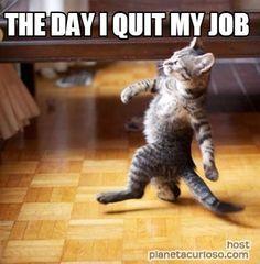 Funny Quitting Job Memes Funny Cat Memes Animal Memes Animals