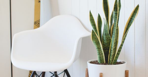 If you're looking for a stylish yet minimalist plant stand, this do-it-yourself