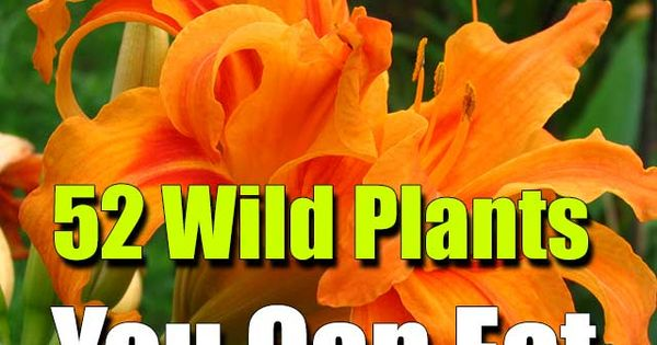 52 Wild Plants You Can Eat - SHTF, Emergency Preparedness, Survival Prepping,