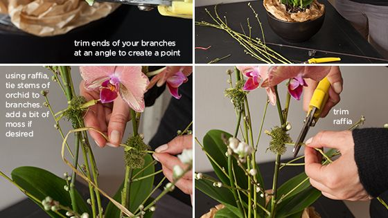 Use this easy step-by-step tutorial to style a grocery store orchid into