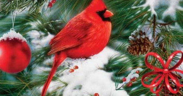 The Cardinal Christened The Christmas Bird For Its