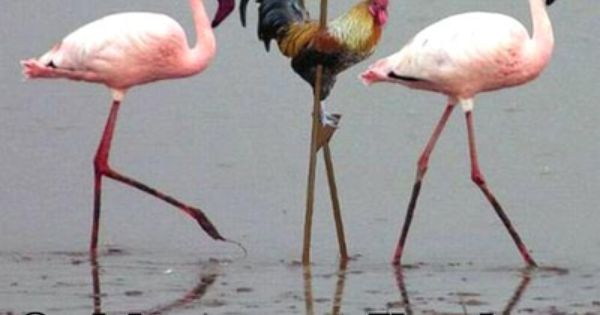 I became a flamingo + Meme by Debitos | Flaming Memes ...