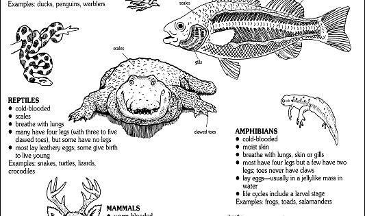 diagram of vertebrate taxa and their characteristics